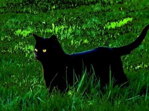 gato_preto-3